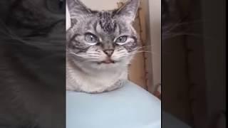 Чудная кошачья морда