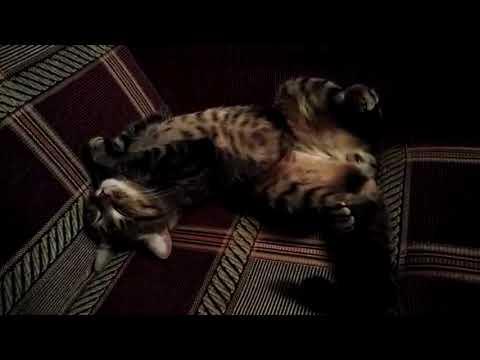 Лечили Кота Сеню от Мочекаменной болезни! Цистит!? Кот без кошки как себя ведёт! Как Кот отвечает!?