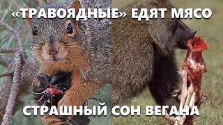 """""""Травоядные"""" едят мясо - Все животные """"всеядные"""" - Карнивор и Кето диета"""