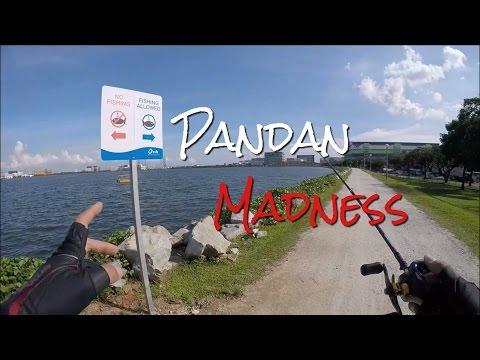 Pandan Madness! Fishing In Singapore