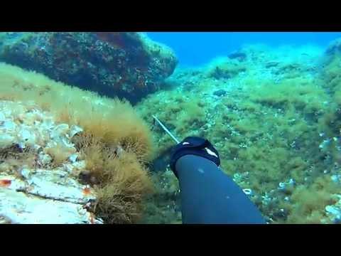 Pole Spearfishing In Greece Vol.1 - Υποβρύχιο ψάρεμα με καμάκι  Vol.1 ✅