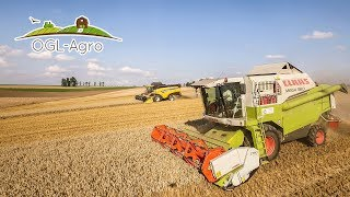 Duże żniwa 2017 New Holland CX6080 i Claas Mega 360 w pszenicy, Fendt 926 & Metaltech Dji Phantom