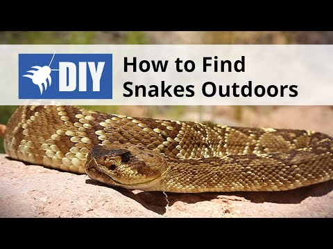 how to get rid of snakes around your home