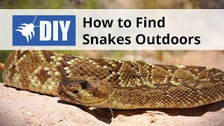 How to Find Snakes Outdoors - Snake Inspection