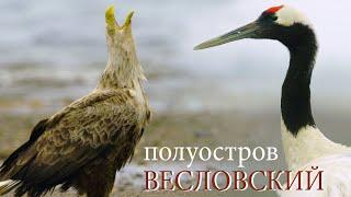 Птичий рай на Курилах: полуостров Весловский   Film Studio Aves