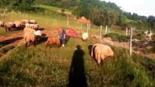 Ferme bio du pech del rey bébé âne, moutons et chèvre