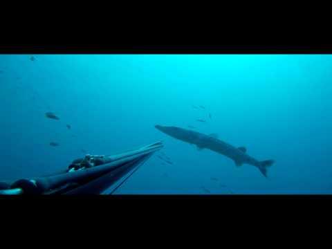 Barracuda - ciguatera