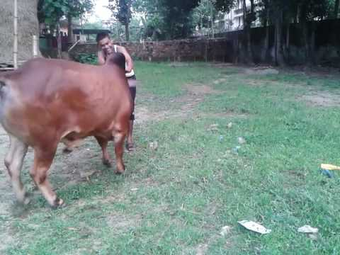 Shah Dairy And Cattle Farm/Sylhet