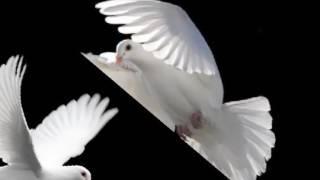 Merpati Putih (Chrisye)