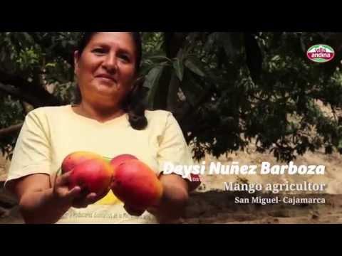 Testimony of a Mango agricultor for Villa Andina in Cajamarca, Peru