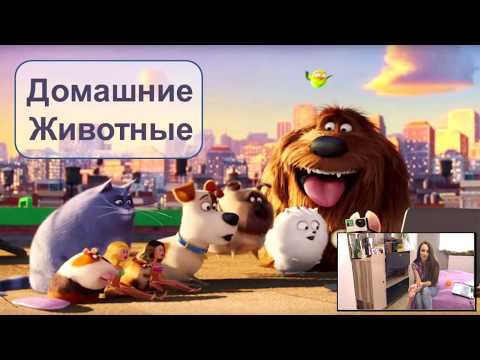 About pets in Russian: Домашние Животные