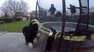 Собака прыгает с детьми