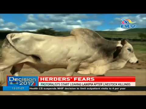 Pastoralists start leaving Laikipia after livestock killings