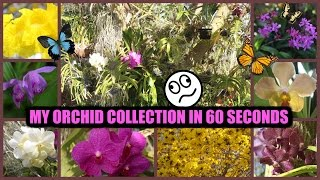 M.Y. Orchid Collection in 60 Seconds!