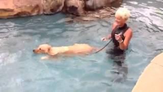 K9katelynn Teaches Owner And  Golden Retriever (abby) How To Swim In Mesa,az