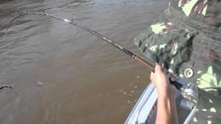 ブラジル パラナ水系某所 ドラード釣り