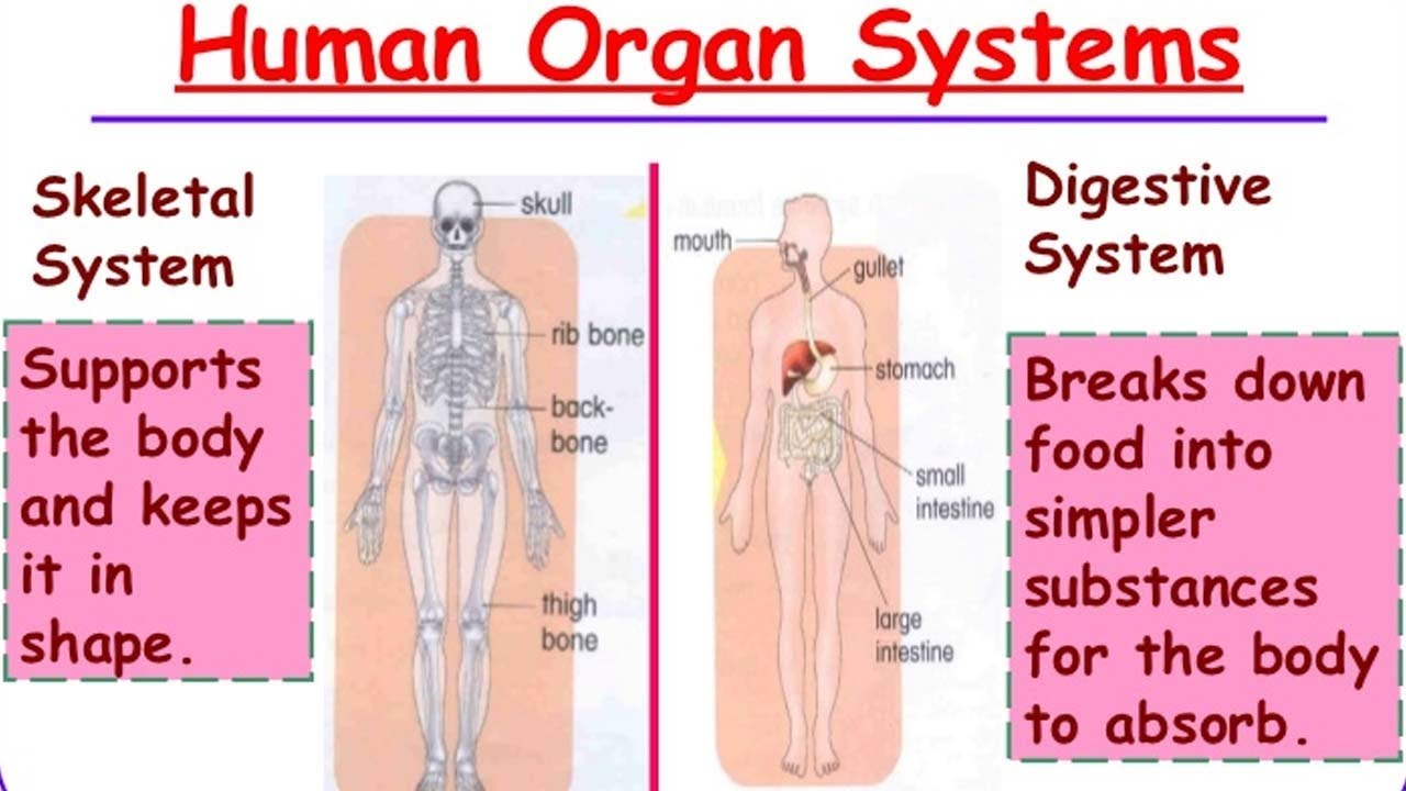State Board | 6th Class Science | 6th Class Science - Organ Systems ...