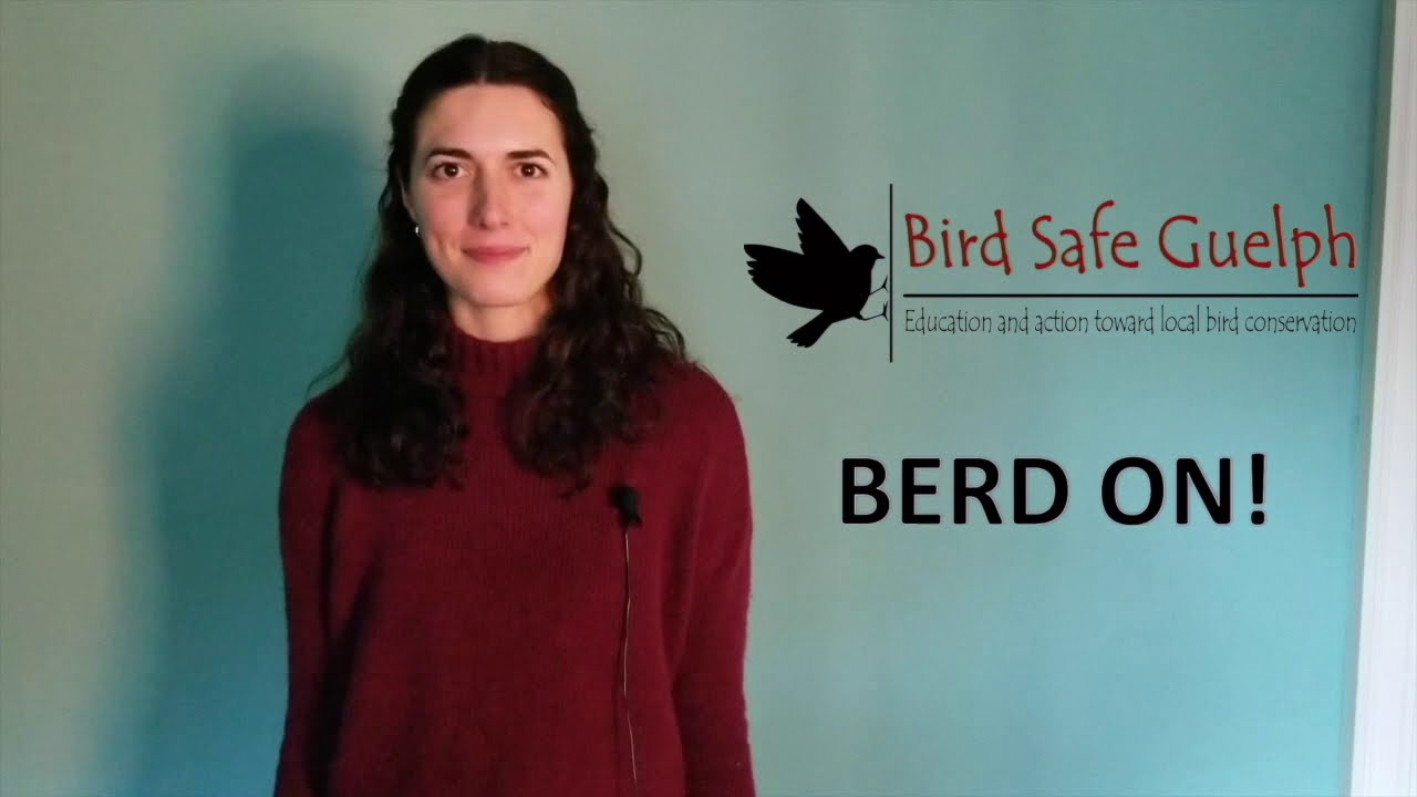 Bird Safe Guelph
