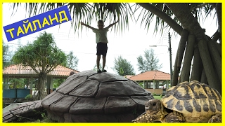🐢 Тайланд День 5 ГИГАНТСКИЕ черепахи ТЫСЯЧА черепах Видео для детей