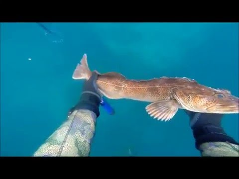 Spearfishing Big Sur, May 2016, Grey Whale encounter