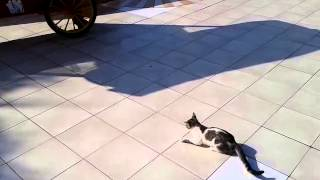 Кошка ест ящерицу. Лучший форум в г. Жирновск - ЖИРАФ