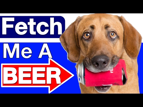 How to Teach your Dog to Fetch a Beer!