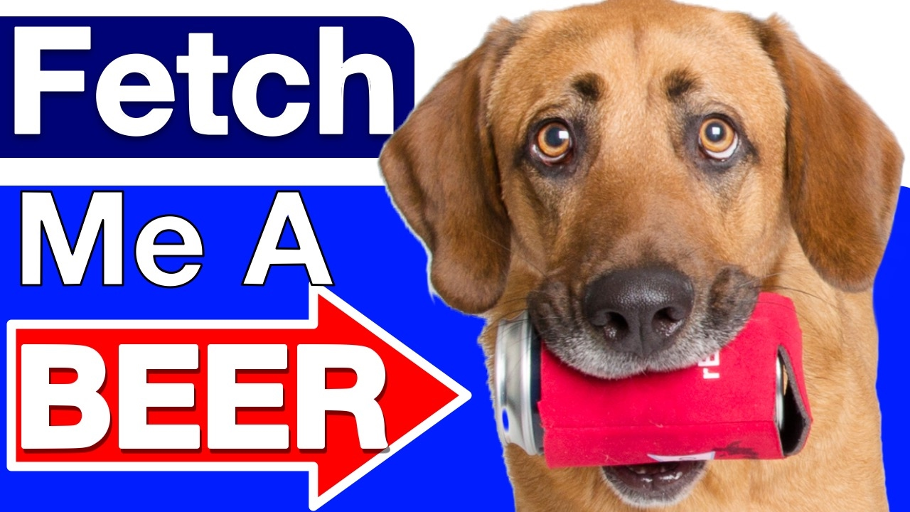 How To Train Dog To Fetch Beer
