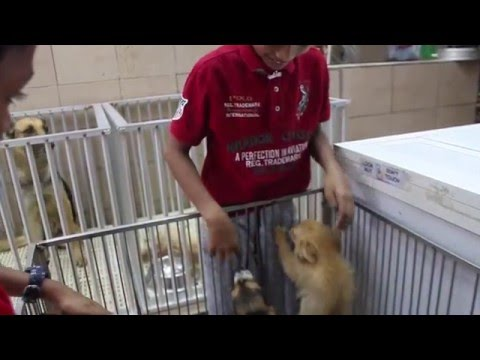 Sharjah Animal Market with Rayhan