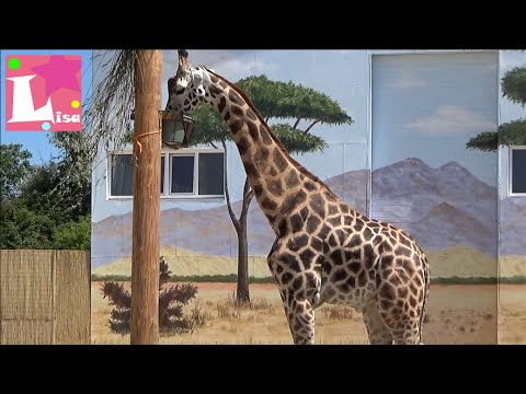 BIOPARK Odessa vlogs hike in the new zoo Many wild animals Biopark amusement park with animals