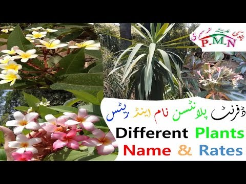 Price And Rates Are Different Kinds Of Plants In | Madina Nursery |