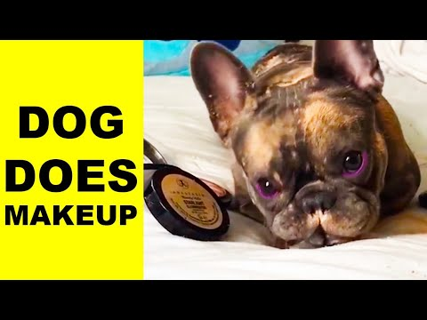Cute Dog Doing A Makeup Tutorial | FailReact thumbnail