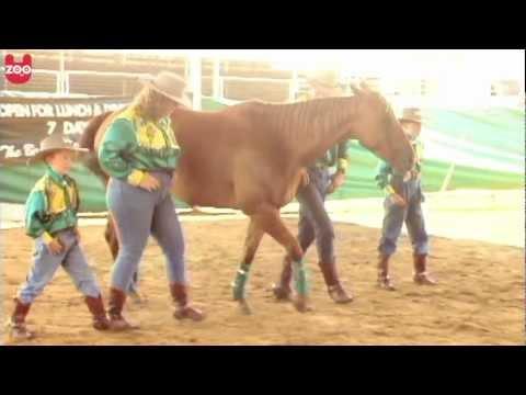 Line Dancing Horse in Australia