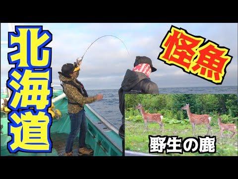 北海道の海でオオカミのような魚を狙う!!#1