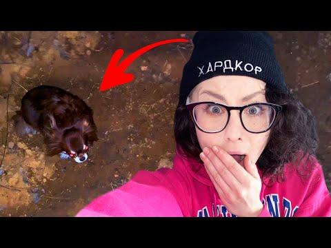 Собака ночью упала в яму! Как Миша провалилась? Кто первый выберется Челлендж с собаками