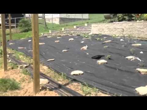 GardenDeer Fence YouTube