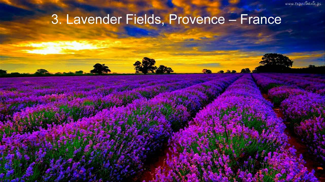 Top 5 Most Beautiful Flower Fields All Over The World