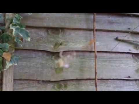 Little spider plucking bigger spider's web strings
