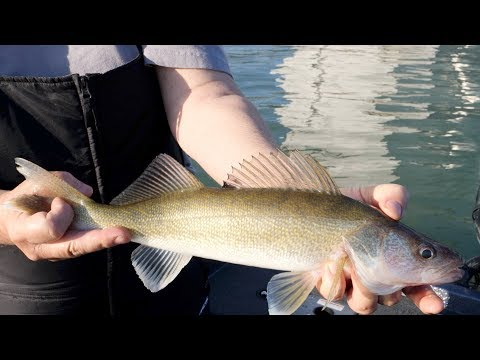 Walleye Spectacular! Michigan Out Of Doors TV #1824