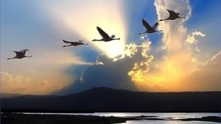 Igor Korg 'Годы летят'  . Авторская .  KORG PA900