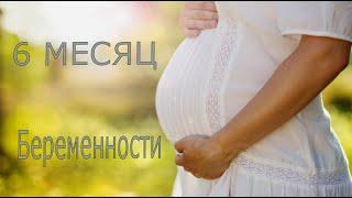 Шестой месяц беременности.