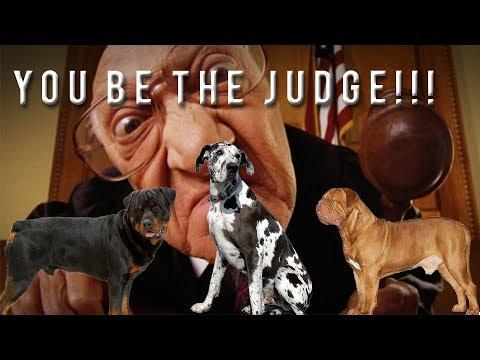 YOU BE THE JUDGE: GREAT DANE ROTTWIELER DOGUE DE BORDEAUX