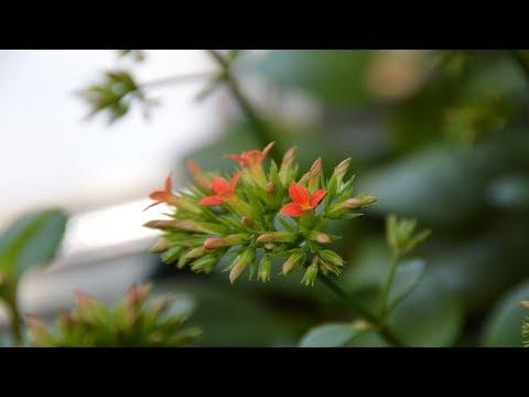 Цветы на подоконнике.  Как себя чувствуют цветы на подоконнике?