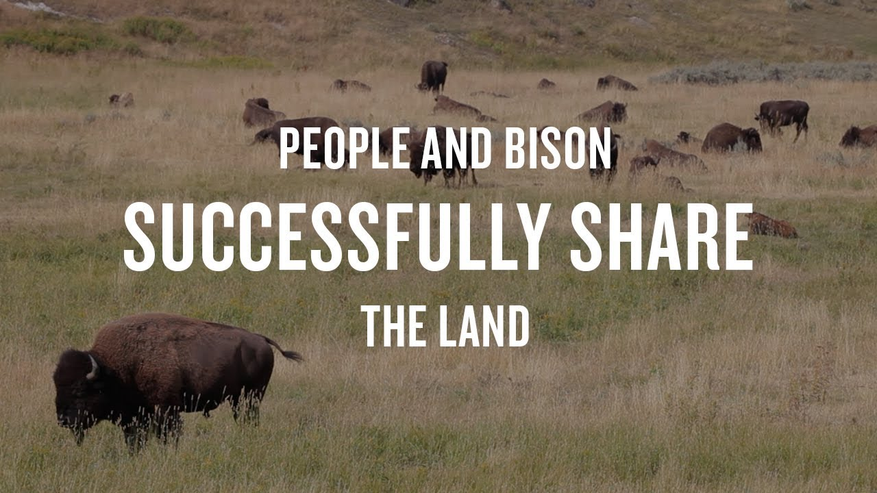 People and Bison Successfully Share the Land