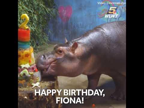Happy Birthday Fiona Hippo Gets A Cake
