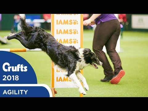 Agility - Crufts Singles Final - S/M/L (Agility) Part 2 | Crufts 2018