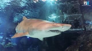 FSO XTREME XPERIENCE - Tiburón - Baño entre tiburones
