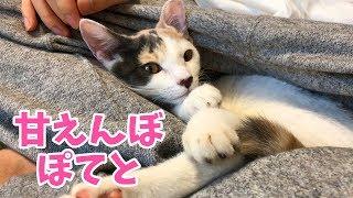 あぐらに潜り込んで甘える子猫が可愛い