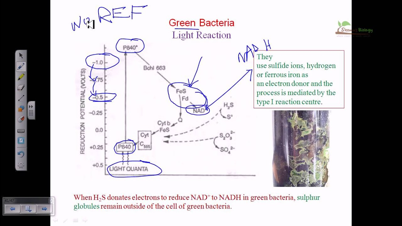 Light reaction of green bacteria youtube pooptronica Choice Image