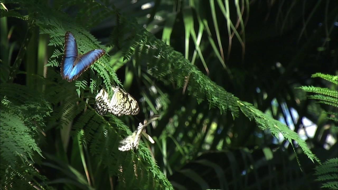 Florida Museum Butterfly Rainforest Exhibit Youtube