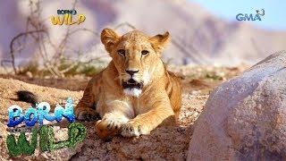 Born to Be Wild: Doc Ferds visits Al Ain Safari
